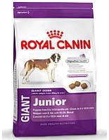 Сухий корм для собак ROYAL CANIN Giant junior 15 кг