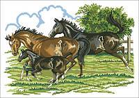 Рисунок на канве для вышивки нитками мулине 50833 Лошади