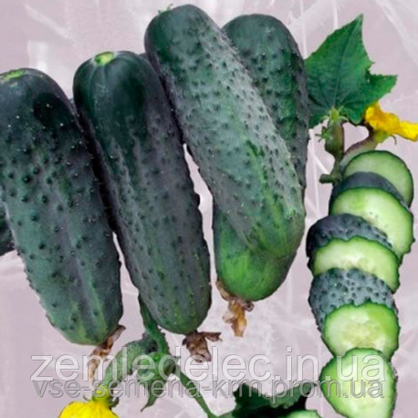 Семена огурца Аристократ 500 семян