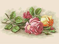 Рисунок на канве для вышивки нитками 20384 Чайные розы