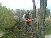Спиливание и подрезка деревьев
