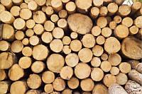 Лес –кругляк из хвойных пород дерева (пиловочник сосны)