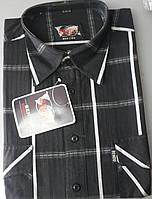 Рубашка с коротким рукавом 100% хлопок (38.39.40.41.42р-р)