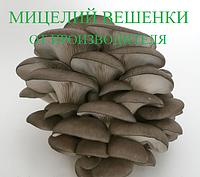 Мицелий Вешенки экологический чистый. Фасовка по 1 кг