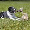 Trixie ТХ-35912 игрушка для собак  гриф (плюш) 28см