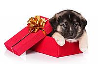 Подарок (консерва или лакомство для собак)