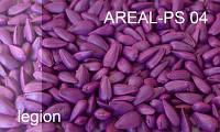 Краситель для семян фуксия  AREAL–PS 04
