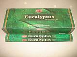 Eucalyptus Hem, фото 3