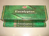 Eucalyptus Hem, фото 5