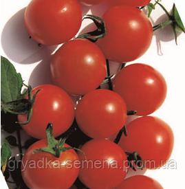 Томат Биби  SEMO 1000 семян