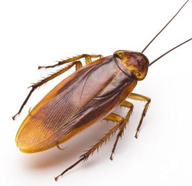 Обработка помещений от тараканов в Днепре и Днепропропетровской области