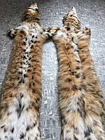 Рысь натуральная канадская пятнистая 80 см