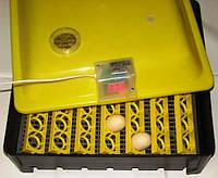 Бытовой инкубатор ASEL для 56 куриных и утиных яиц