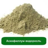 Аскофиллум водоросль, 50 грамм