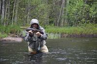 Ручьевая форель, 53 см. Река Альстеран, Швеция