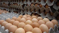 Яйця курячі харчові фермерські 1 кат. (C1)