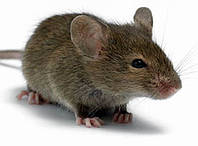 Борьбы с мышами