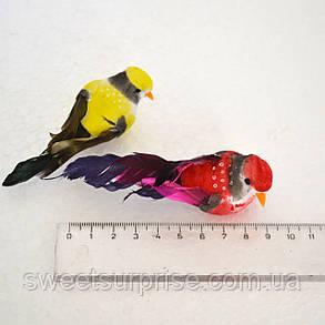 Птичка на прищепке, фото 2