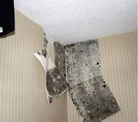 Уничтожение плесени и грибка, фото 1