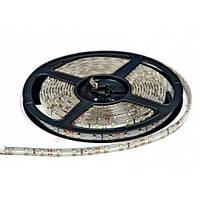 Белый холодный лента светодиодная 4,8W SMD3528 (60 LED/м)  Outdoor IP54