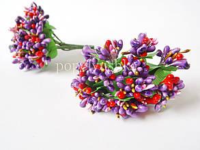 Дрібноцвіт комбінований фіолетовий