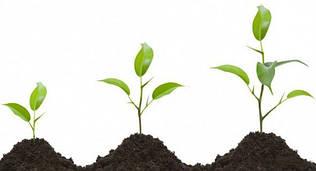 Стимуляторы роста, укоренители