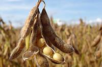 Влияние качества семян на результаты урожайности