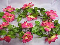 Цепочка чайных роз, фото 1