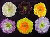 Головка мак атлас- искусственных цветов