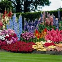 Саженцы многолетних цветов и трав