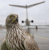 Контроль количества птиц