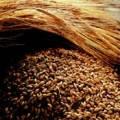 Солод в хлебопечении