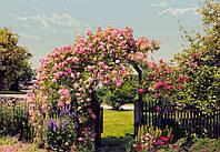 "Фотообои Komar ""Розовый сад"" 8-936"