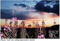 Влияние растений. Аллелопатия