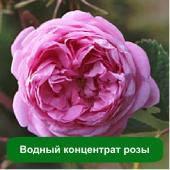 Водный концентрат розы, 5 мл