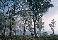 """Фотообои Komar """"Сказочный лес"""" Fantasy Forest 8-253"""