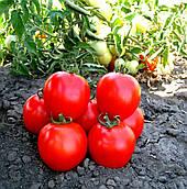 Томат Асвон F1 Kitano Seeds 5000 семян