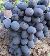 Виноград Гала, столовый ранний, саженцы однолетние