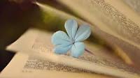 Отдушка Нежный цветок