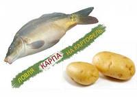 Вареная картошка - идеальная насадка для ловли карпа