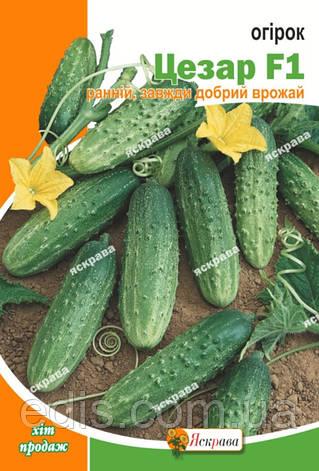 Огурец Цезарь F1 5 г, семена Яскрава, фото 2