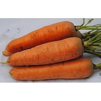 Морковь Курода 0,5кг Rem seeds