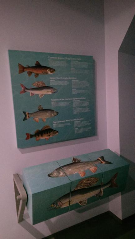 Музей смт. Вигода 1
