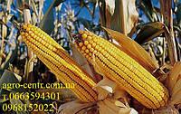 Семена кукурузы НС 2014 ФАО 260