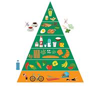 Пирамида здорового питания и физической активности