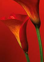 Фотообои бумажные на стену 183х175 см 4 листа:  Цветы - Красные каллы  №406