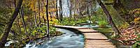 Фотообои бумажные на стену 366х127 см 4 листа: природа, Дорога в лесу  №436