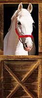 Фотообои бумажные на дверь 86х200 см 1 лист: Конь
