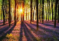 Фотообои флизелиновые на стену 366х254 см 8 листов: природа Рассвет в лесу