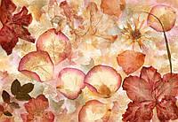 Фотообои флизелиновые на стену 366х254 см 8 листов: Высушенные цветы  №963